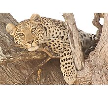 Spotted in Tree Photographic Print