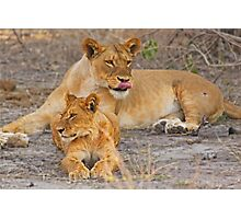 Lioness with Cub Photographic Print