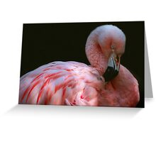 Preening Flamingo Greeting Card