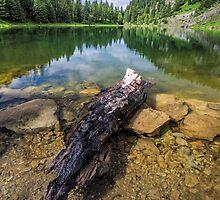 Log by rilindh