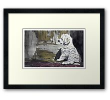 Puppy Dog - www.jbjon.com Framed Print