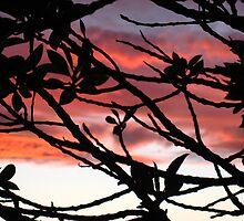 Sun set over Hawke's Bay, New Zealand by mewmew