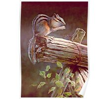 CHIPMUNK by SHARON SHARPE Poster