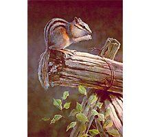 CHIPMUNK by SHARON SHARPE Photographic Print