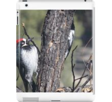 Red Capped Woodpecker  iPad Case/Skin