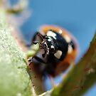 Ladybug Mug by BluAlien