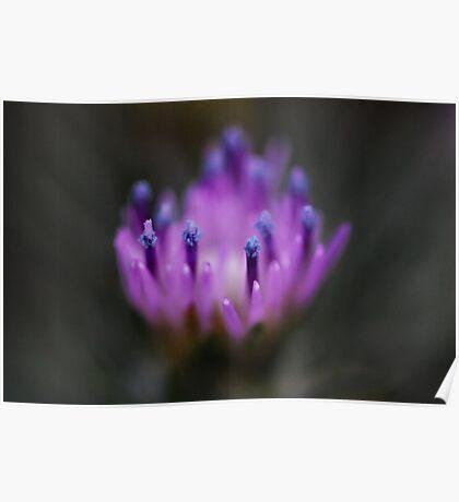 Blue Pollen Poster