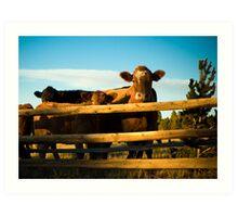 Cattle Art Print