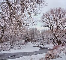 Winter Creek by Bo Insogna