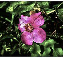 Wild Flower in the Forest - www.jbjon.com by Jonathan Baldock