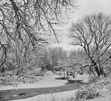 Winter Creek in Black and White by Bo Insogna