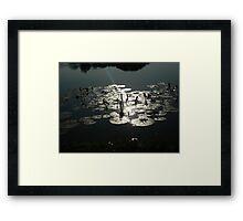 Tranquil Thai Lotus Pond Framed Print
