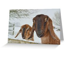 Goats in the snow  Greeting Card