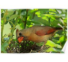 Mrs. Cardinal enters the nest Poster