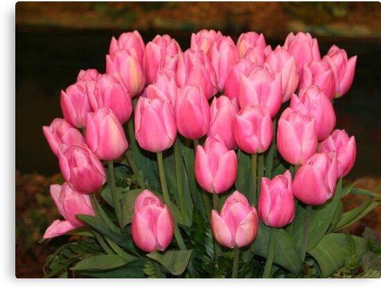 """""""Pink Tulips"""" by Lynn Bawden"""