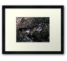 Peeping Otters Framed Print