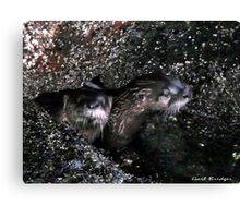 Peeping Otters Canvas Print