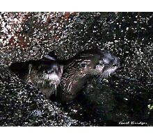 Peeping Otters Photographic Print