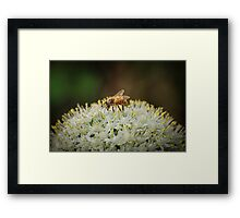 Covered in Pollen Framed Print