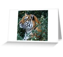 Pretty Kitty Greeting Card