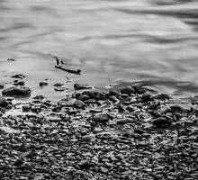Ohanapecosh Riverbank in Black and White by Nicole Petegorsky