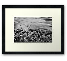 Ohanapecosh Riverbank in Black and White Framed Print