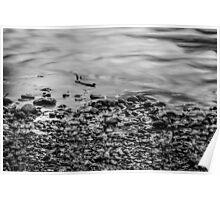 Ohanapecosh Riverbank in Black and White Poster