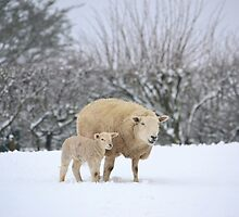 Mum and Baby in the snow by Gail Girvan