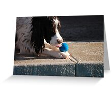 English springer Greeting Card