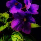 Viola's Treasure by budrfli