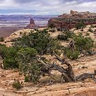 Canyonlands, Utah by CarolM