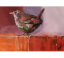 Colourful Wren Photographic Print