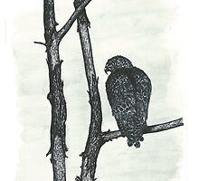 Hawk - www.jbjon.com by Jonathan Baldock