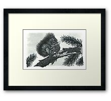 Red Squirrel - www.jbjon.com Framed Print
