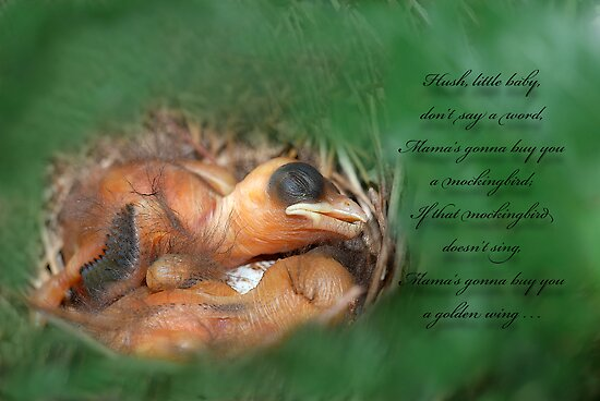 Hush Little Baby by Bonnie T.  Barry