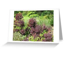Shrubs with Copper Coloured Leaves - Hyde Hall, Essex Greeting Card