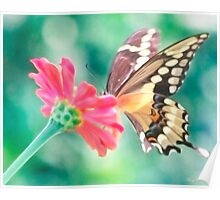 Butterfly Kiss Poster
