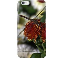 Cautious Rest iPhone Case/Skin