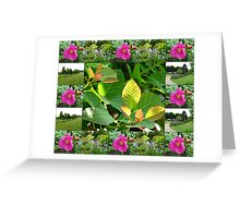 Hyde Hall Collage Featuring Wild Rose and Irises Greeting Card
