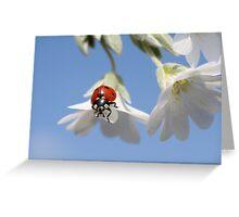 Ladybird. Greeting Card