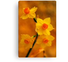 Spring in All Its Glory Canvas Print