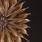 Last Year's Flower (crop version) by Dawne Olson