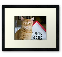 The Greeter Yellow Tabby  Framed Print