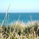 Coogee Beach 1 by Amanda Cole