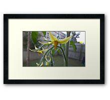 Tomato Flowers Framed Print