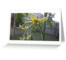 Tomato Flowers Greeting Card