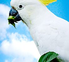 Sulpher crested Cockatoo by Maggiebee