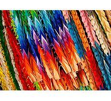 Rainbow Cranes Photographic Print