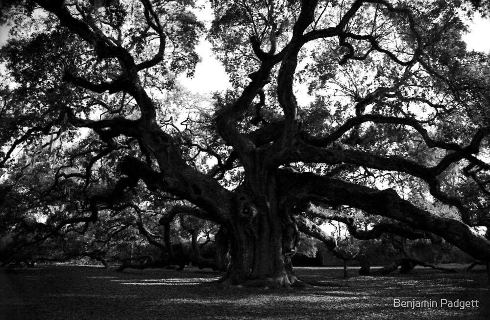 Angel Oak by Benjamin Padgett