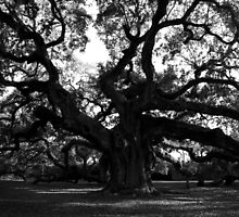 Angel Oak by Benjamin Padgett